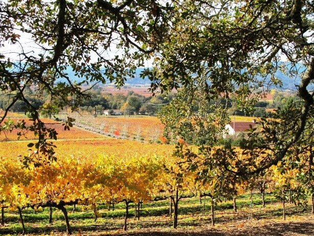 Napa Valley fall