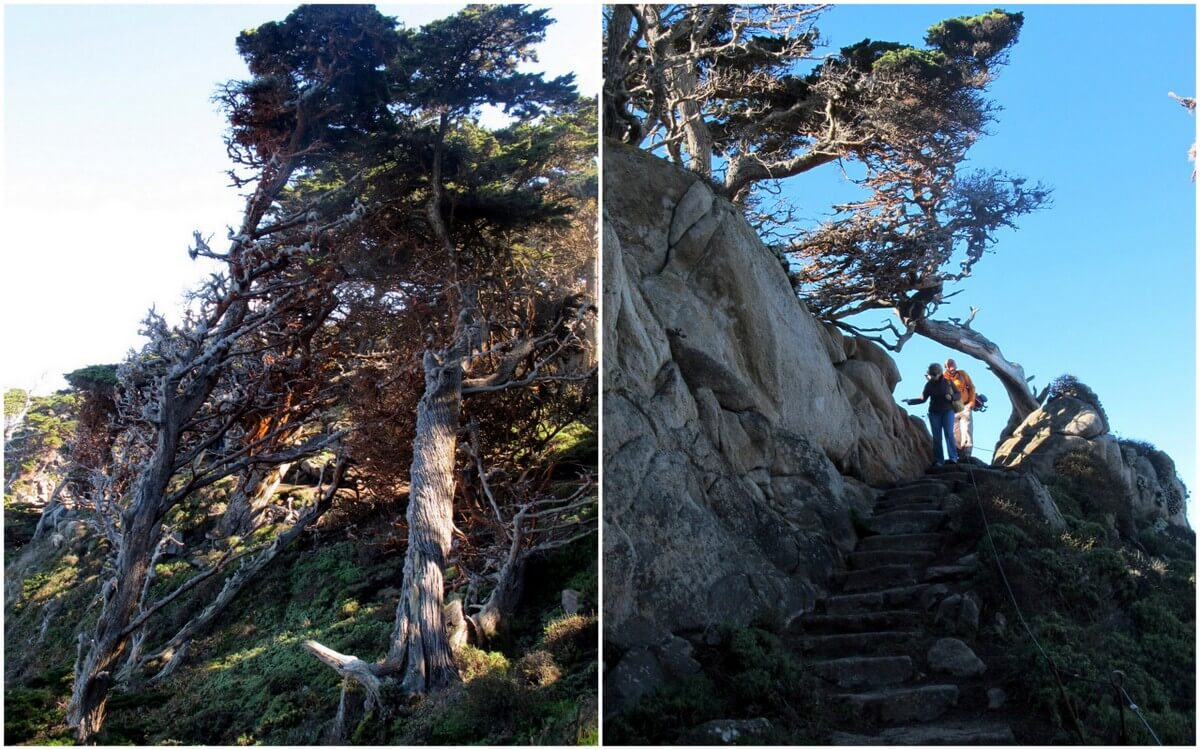 Hikes in Point Lobos