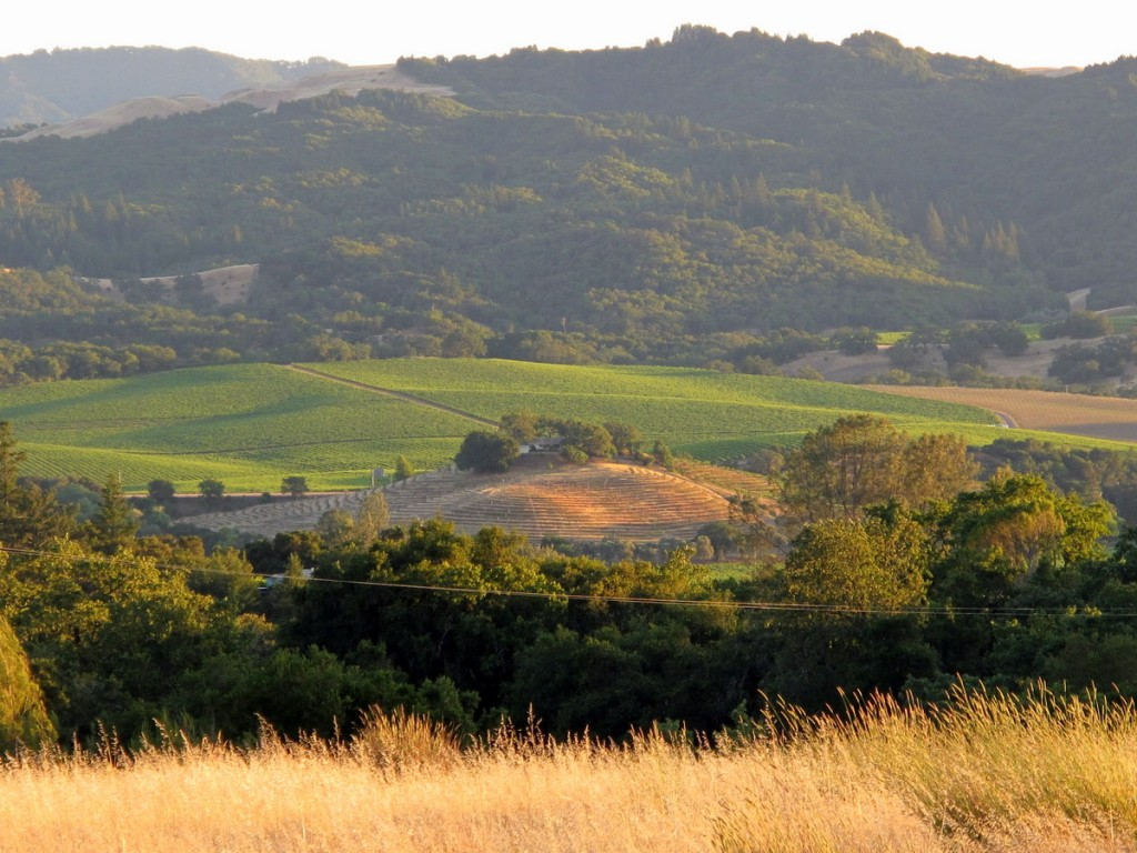 alexander valley image