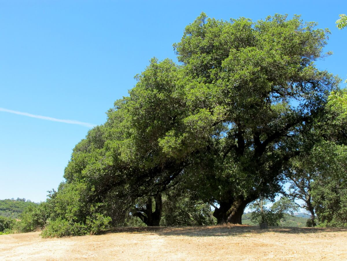 photo essay camping in northern california california oak trees