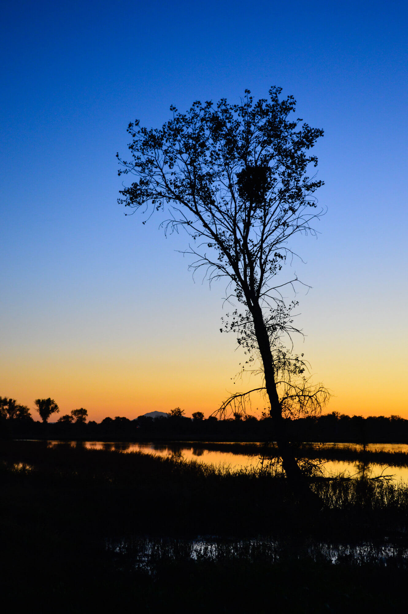 In the Delta, Sandhill Cranes at Sunset, the Cosumnes River Preserve| This Is My Happiness.com