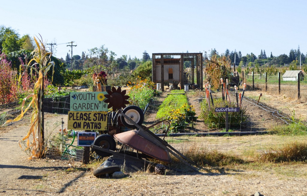 Urban Farm in Sacramento | This Is My Happiness