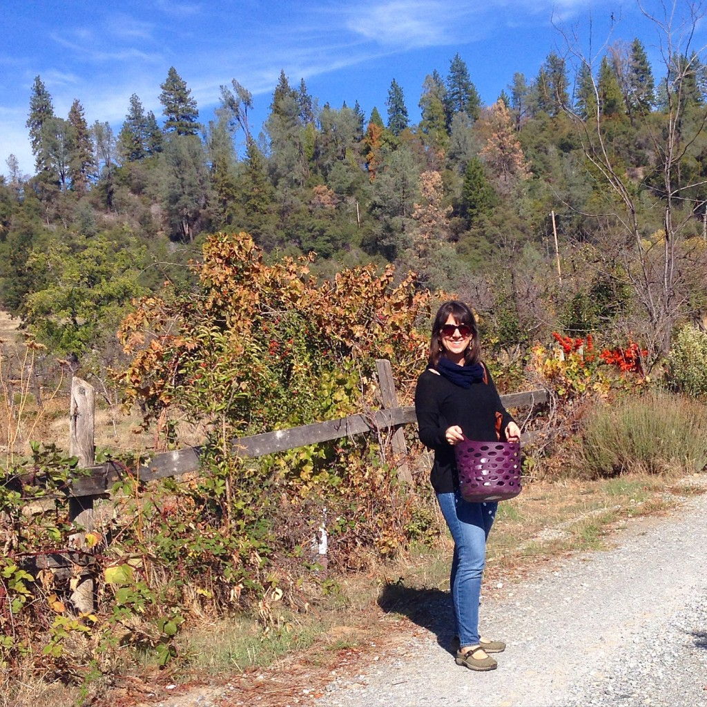 Day Trip to Apple Hill | This Is My Happiness