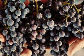 Fetzer Vineyards: The Next Generation of Sustainable Winemaking