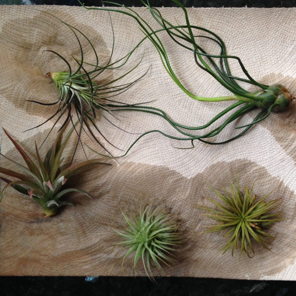 diy wall hanging plants