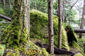 An American Rainforest: One Day in Olympic National Park