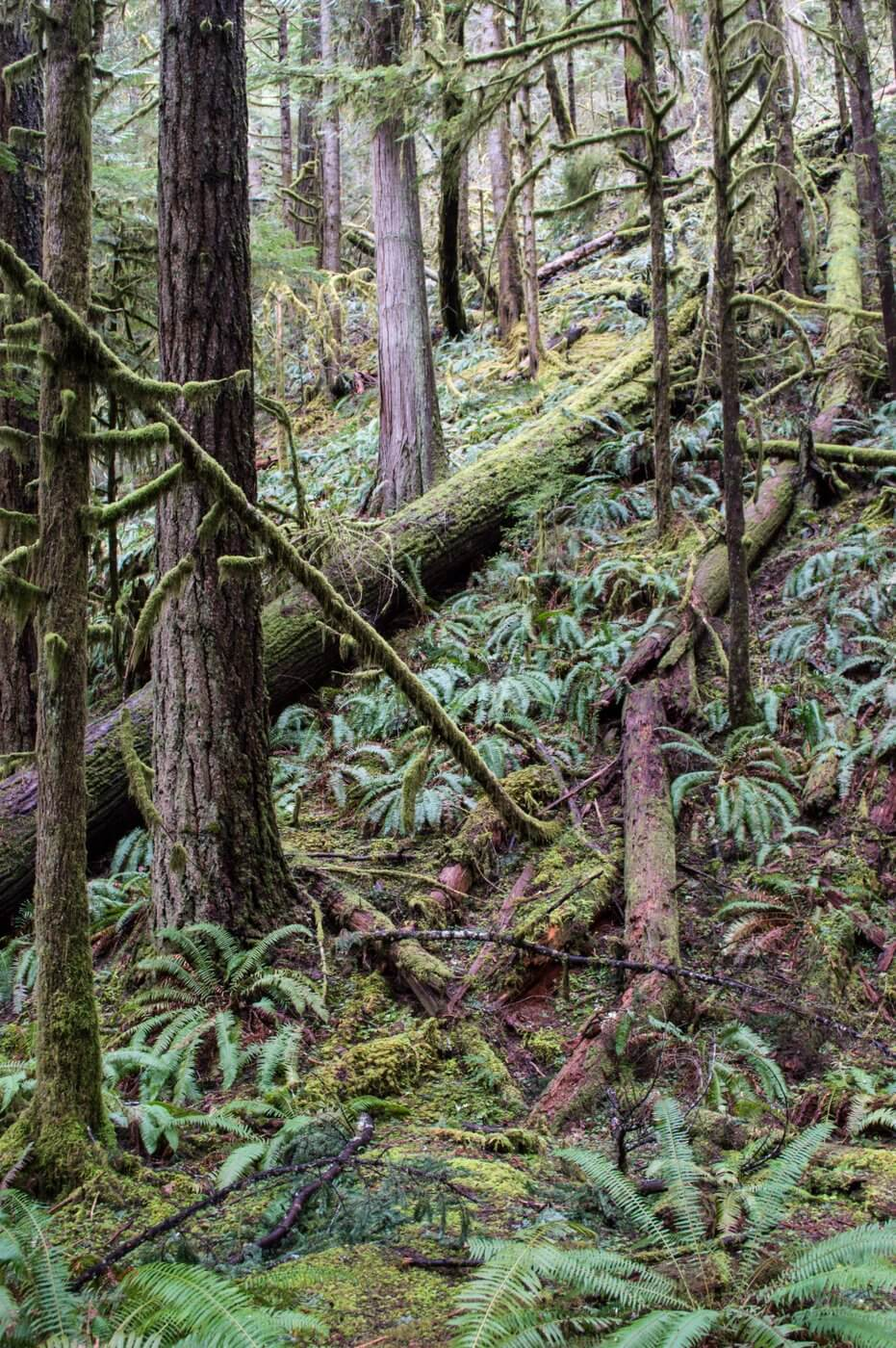 One day in Olympic National Park Easy Day Hike