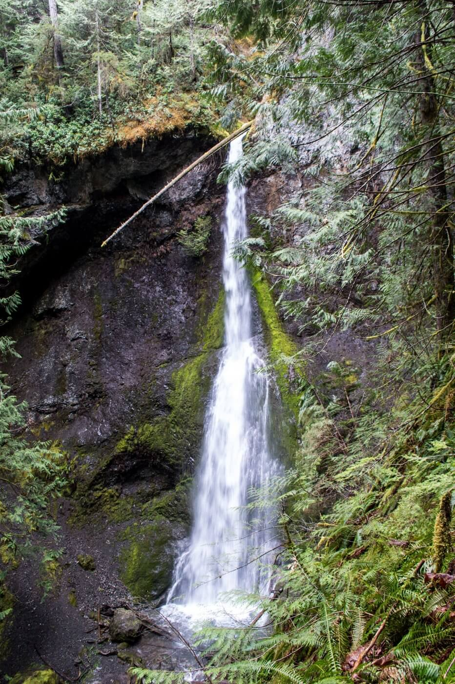 Marymere Falls hike Olympic National Park