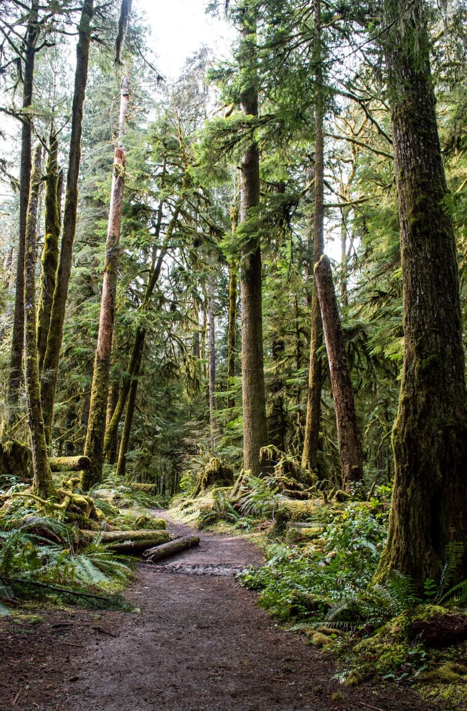 Easy Hike in Olympic National Park Rainforest
