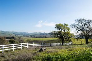 Wine Country with Kids: What to do with kids in Napa and Sonoma