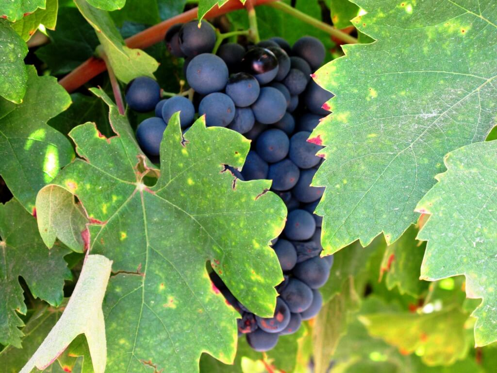 What to do in Northern California in September