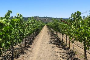 A Family-Friendly Visit to Napa Valley on a Budget