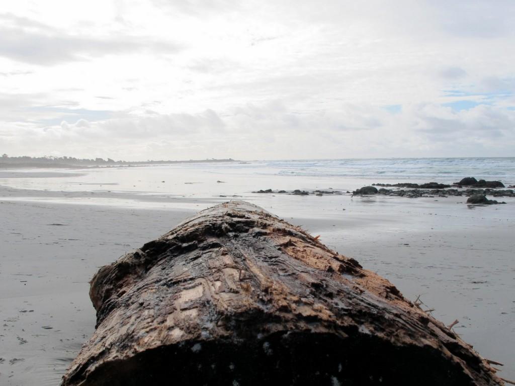 Asilomar State Beach walk