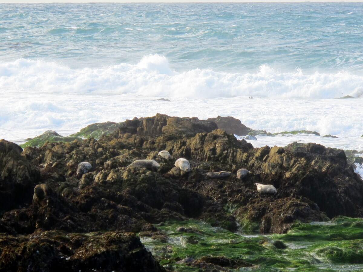 Essay about disneyland california