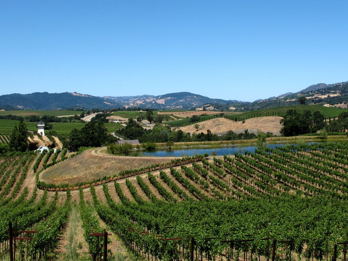 Boutique wineries in Northern California