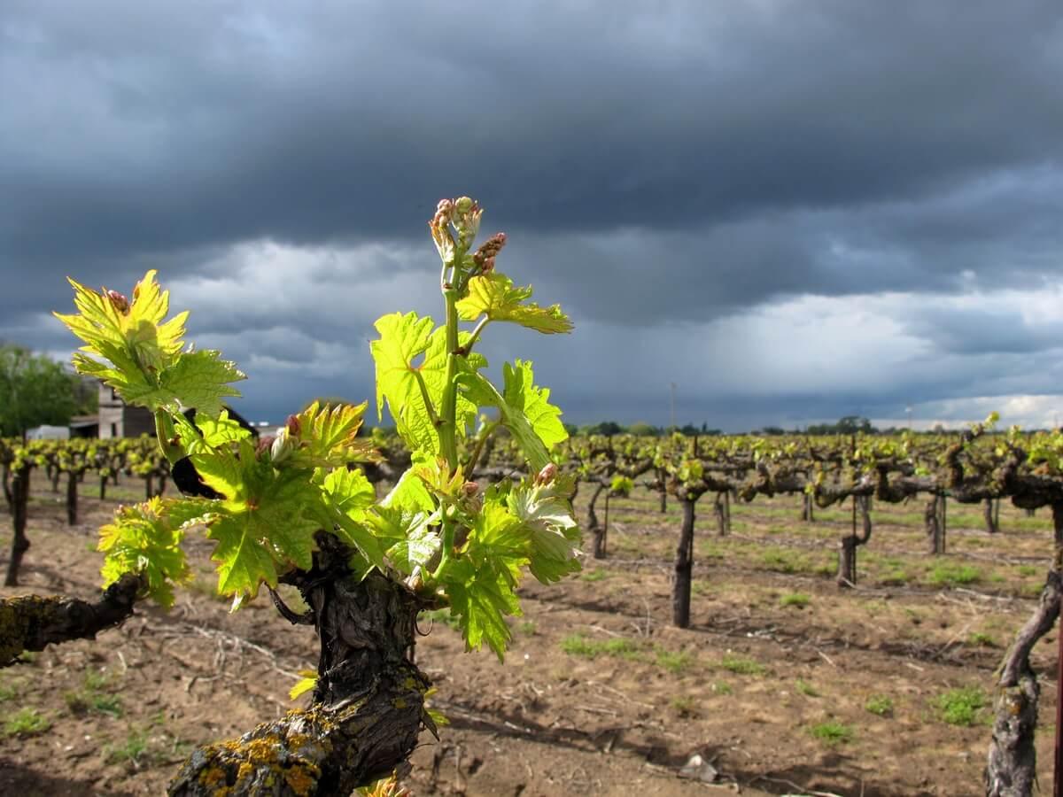 Wine Tasting in Lodi Wine Country
