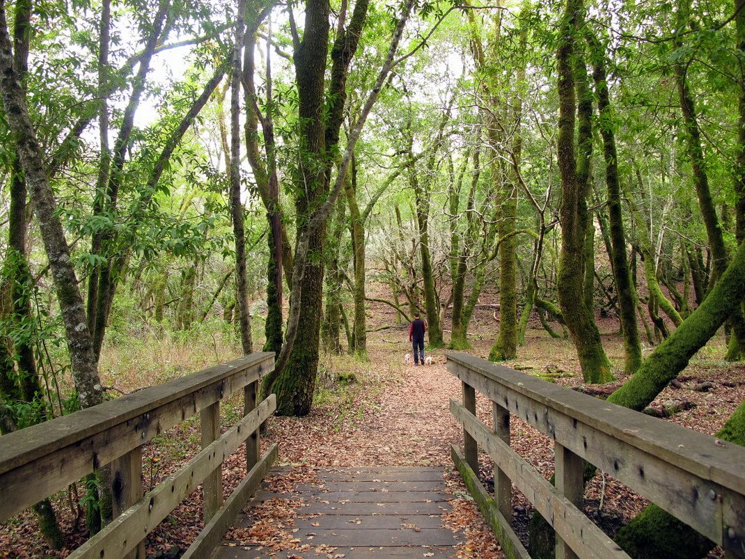 Nature in Marin County in Photos   This Is My Happiness travel blog