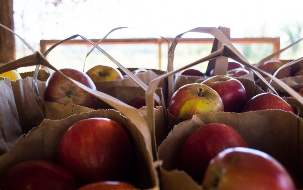 A Fall Day Trip to Apple Hill