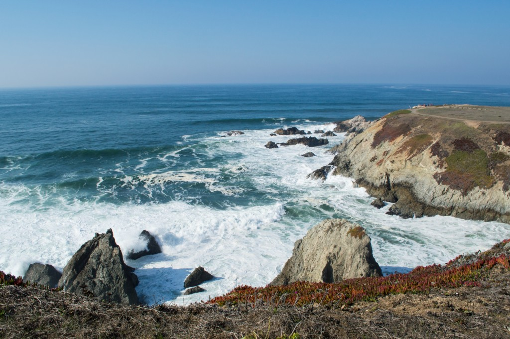 Whale Watching Bodega Bay Tours