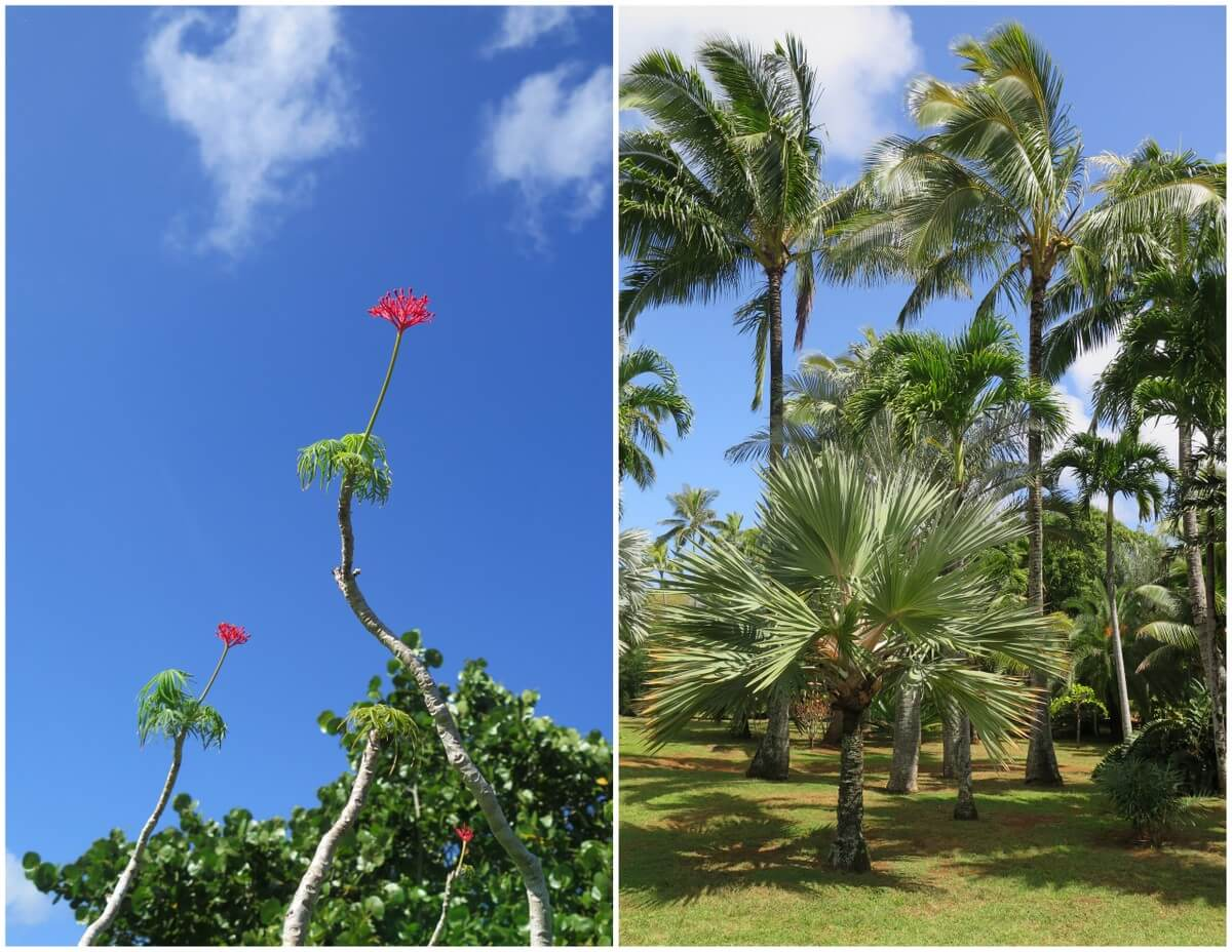 30 Things to Do on Kauai | This Is My Happiness