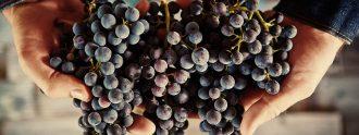 sustainable winemaking