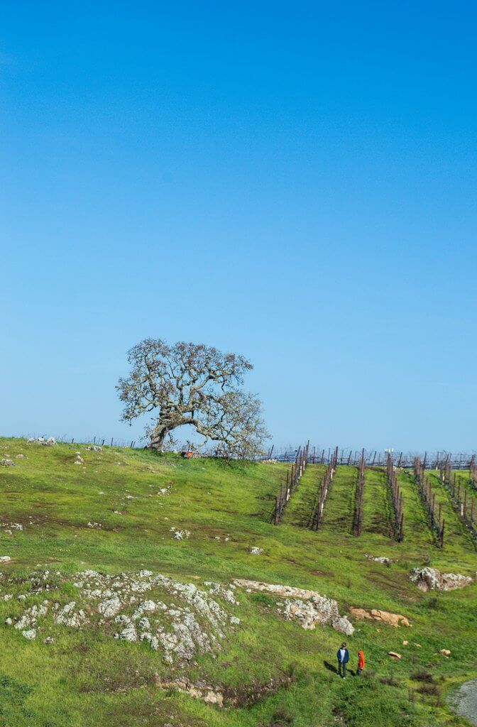 Hike Napa Winery