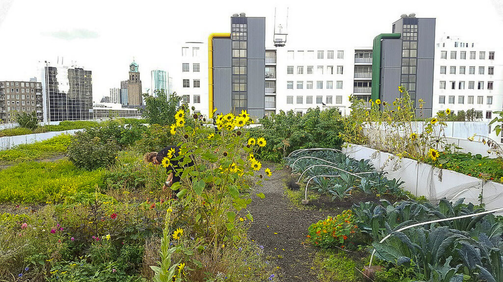 What it's like to live in Rotterdam: urban farms