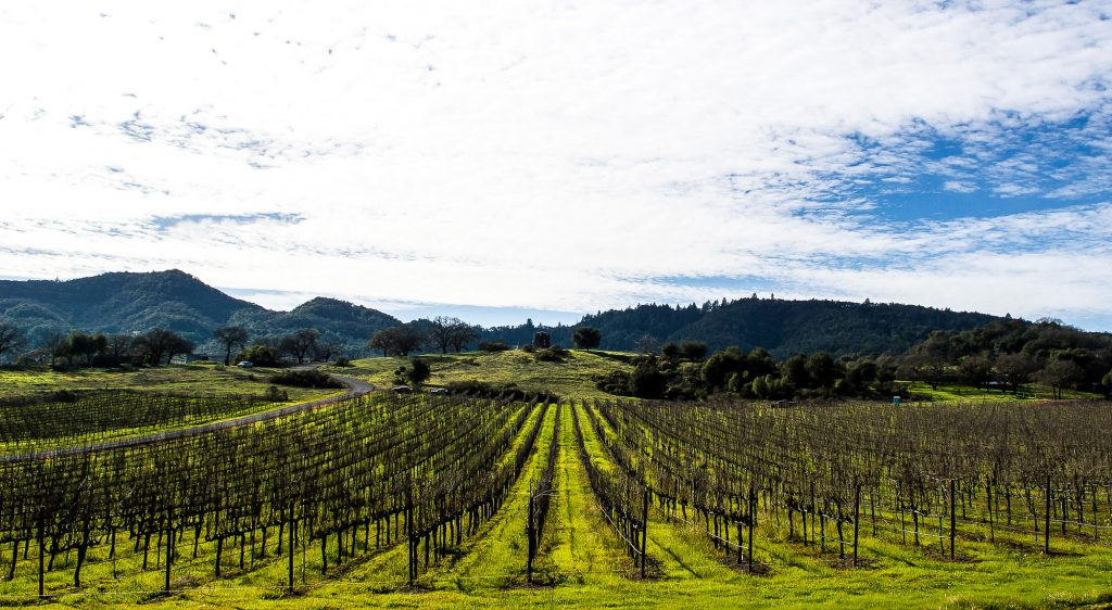What to do in Northern California in January